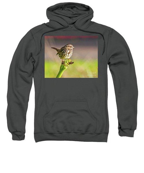 Songster Perching Sweatshirt