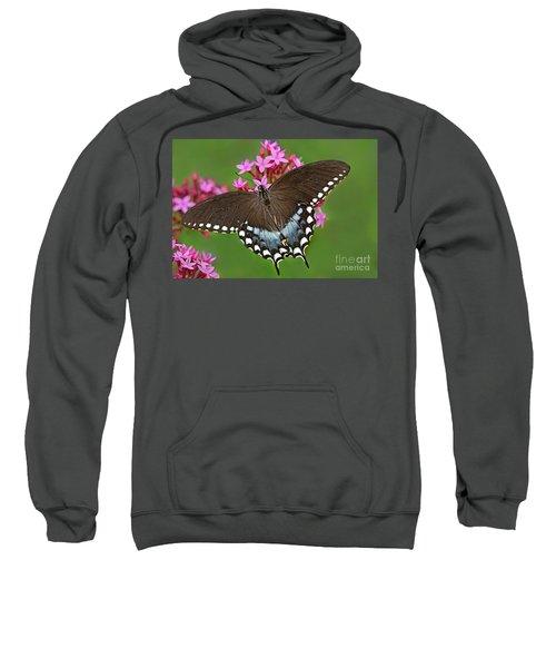 Spicebush Swallowtail Papilio Trollus Sweatshirt