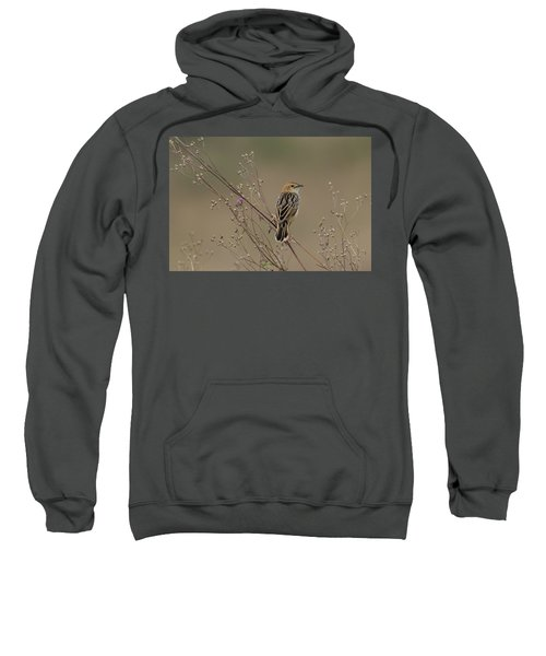 Stout Cisticola Sweatshirt