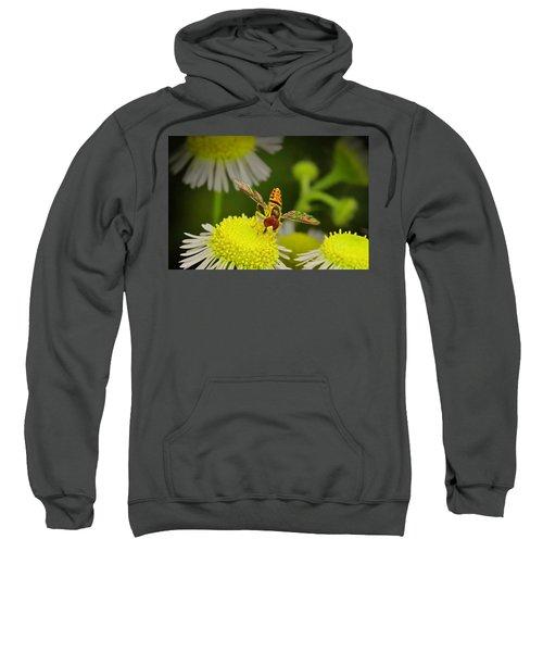 Sugar Bee Wings Sweatshirt