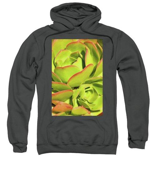 Sweet Succulents I Sweatshirt