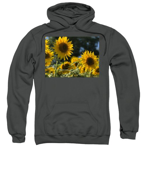 Sweet Sunflowers Sweatshirt