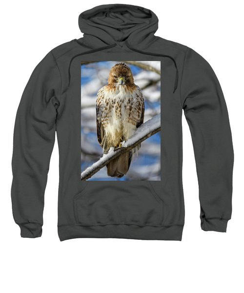 The Look, Red Tailed Hawk 1 Sweatshirt
