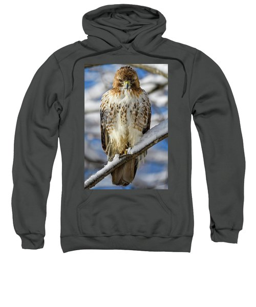 The Look, Red Tailed Hawk 1 Sweatshirt