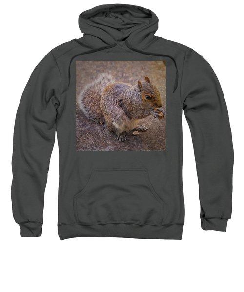 The Squirrel - Cornwall Sweatshirt