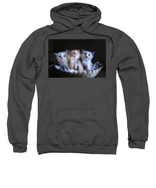 Three Little Kitties Sweatshirt