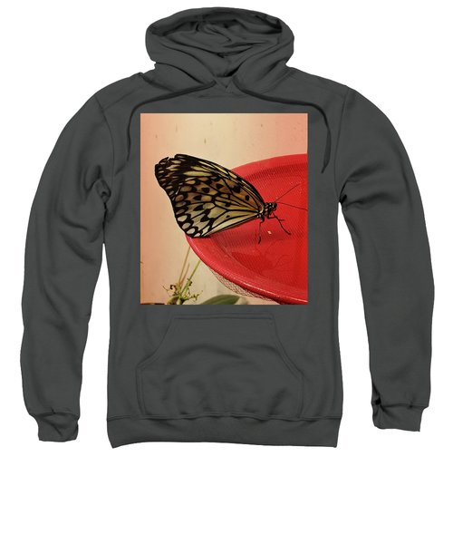 Torn Butterfly Sweatshirt