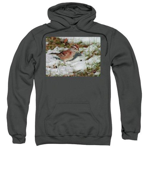 Tree Sparrow In Snow Sweatshirt