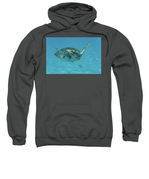 Turtle Approaching Sweatshirt