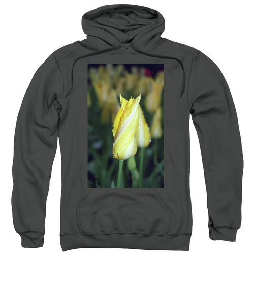 Twisted Yellow Tulip Sweatshirt