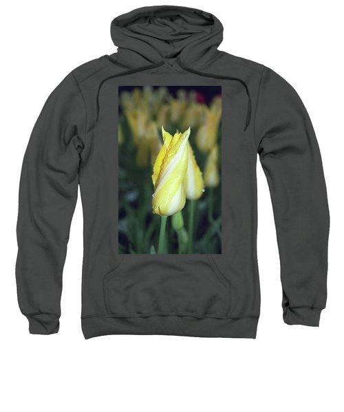 Twisted Yellow Tulip Sweatshirt