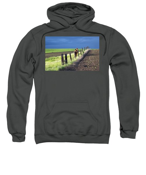 Two Horses In The Palouse Sweatshirt