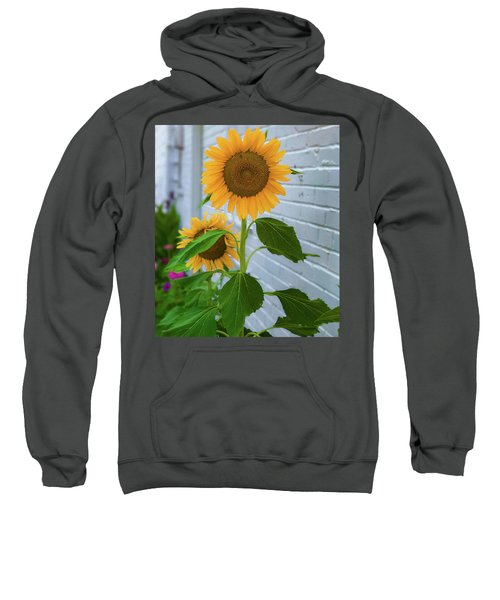 Urban Sunflower Sweatshirt
