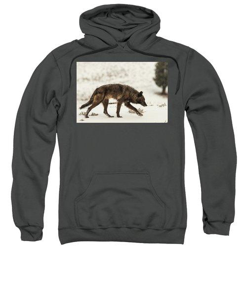W13 Sweatshirt