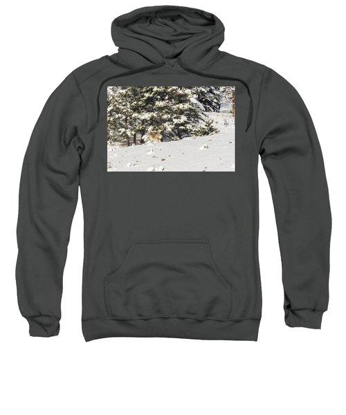 W14 Sweatshirt