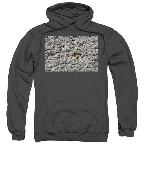 W17 Sweatshirt