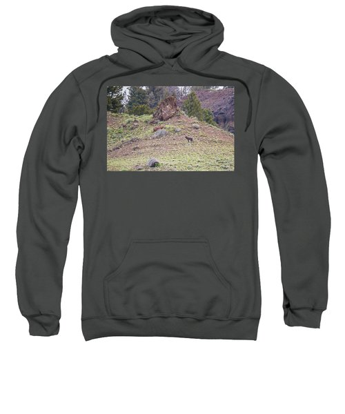 W21 Sweatshirt