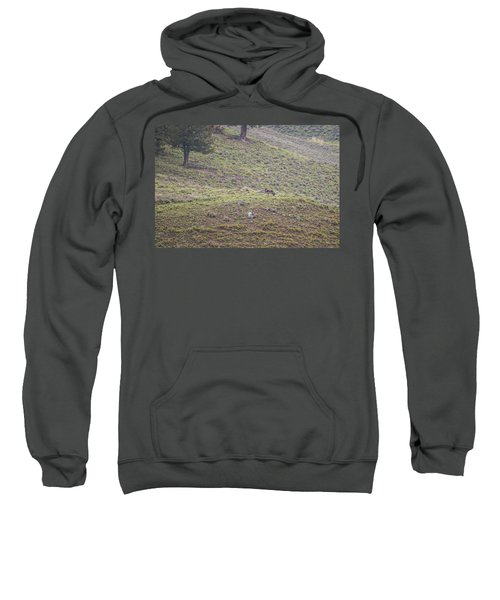 W25 Sweatshirt