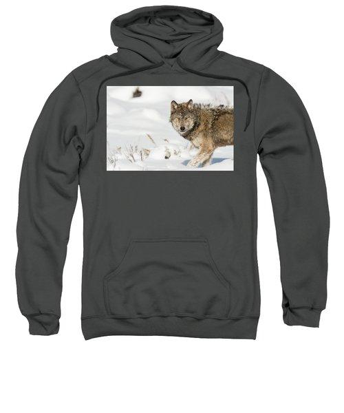 W35 Sweatshirt