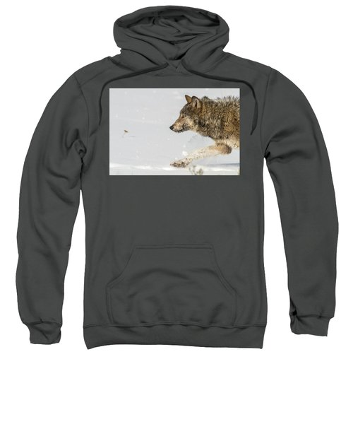 W36 Sweatshirt