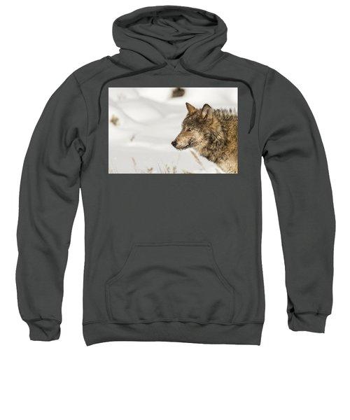 W37 Sweatshirt