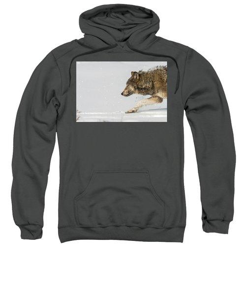 W40 Sweatshirt