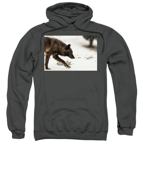 W41 Sweatshirt