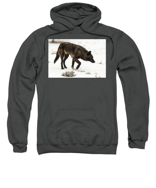 W47 Sweatshirt