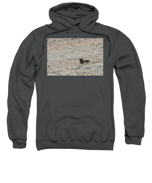 W50 Sweatshirt