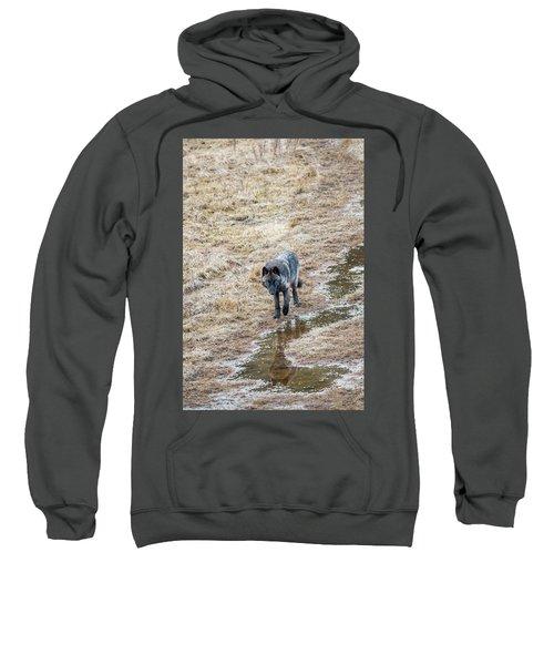 W51 Sweatshirt