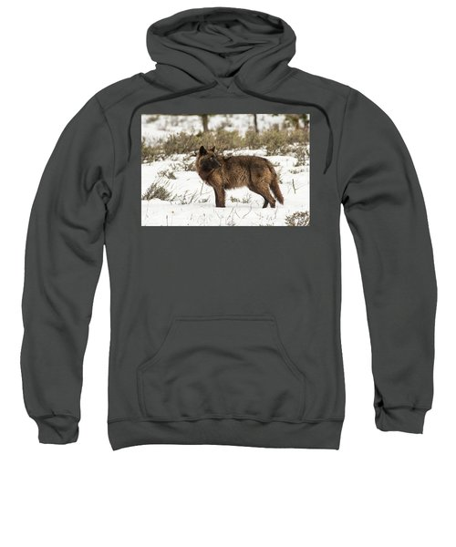 W9 Sweatshirt
