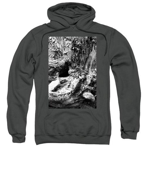 Weathered Stump Sweatshirt