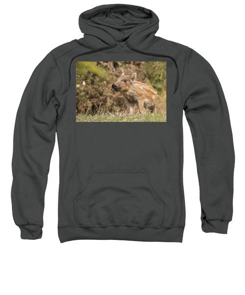 Wild Boar Humbug Sweatshirt