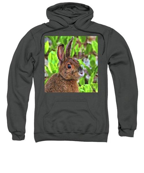 Wild Rabbit Sweatshirt