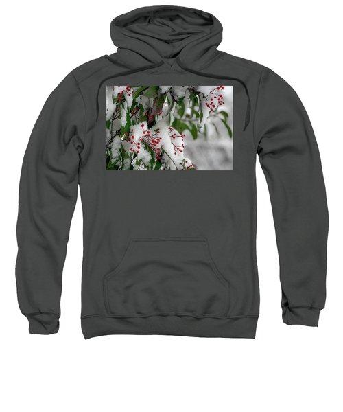 Winter Berries Sweatshirt