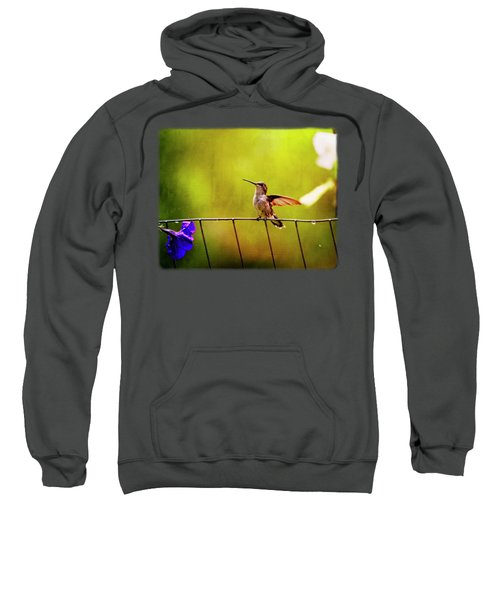 Wistful Hummingbird Sweatshirt