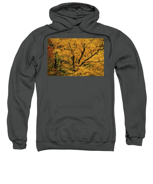 Yellow Tree Leaf Brilliance  Sweatshirt