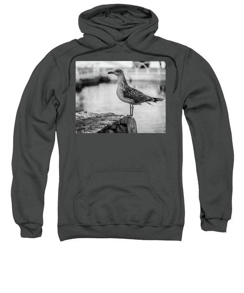 Young Seagull Sweatshirt