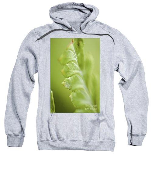 Fern Fronds Sweatshirt