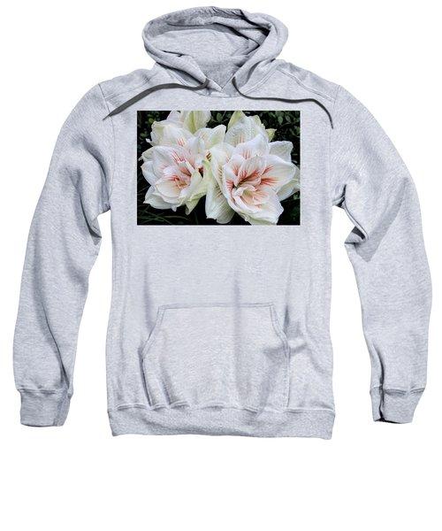 Amaryllis Cluster Sweatshirt