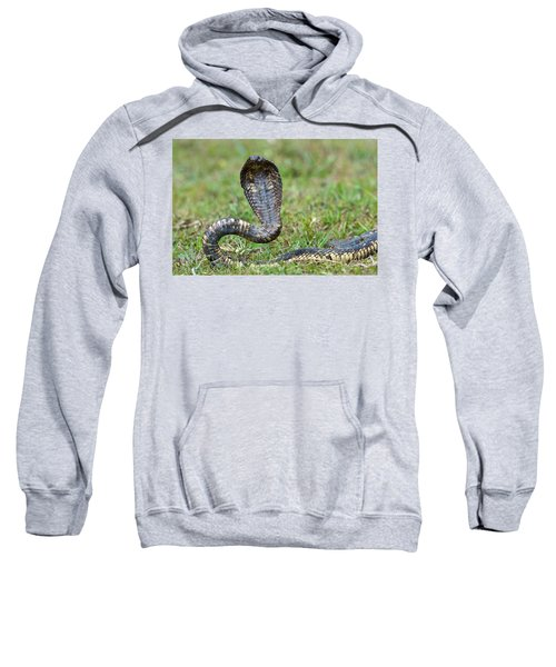 Close-up Of An Egyptian Cobra Heloderma Sweatshirt