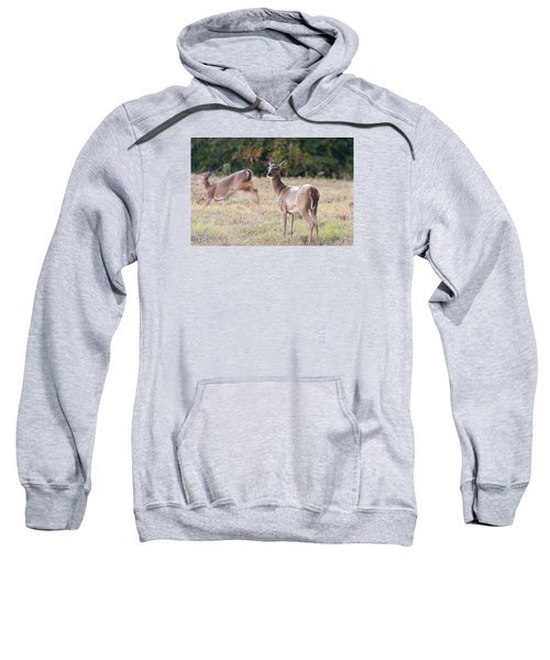 Deer At Paynes Prairie Sweatshirt