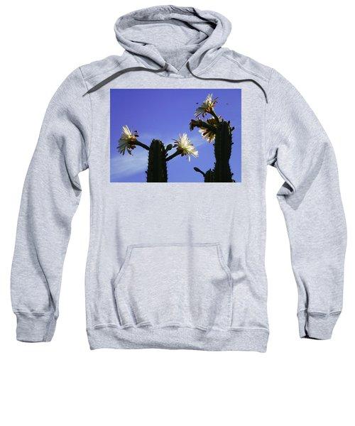 Flowering Cactus 4 Sweatshirt