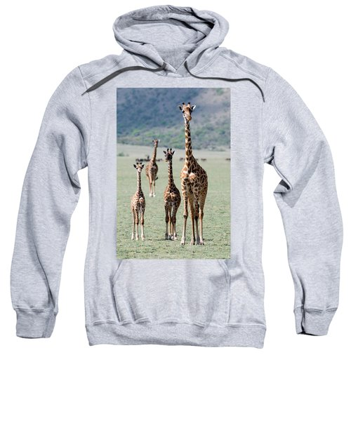Giraffes Giraffa Camelopardalis Sweatshirt