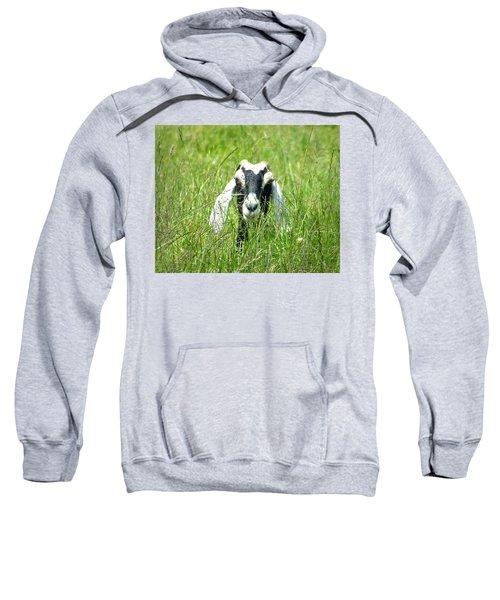 Goat Sweatshirt