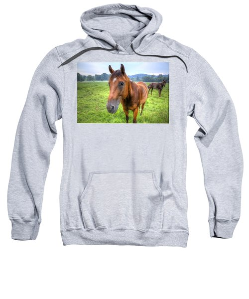 Horses In A Field Sweatshirt