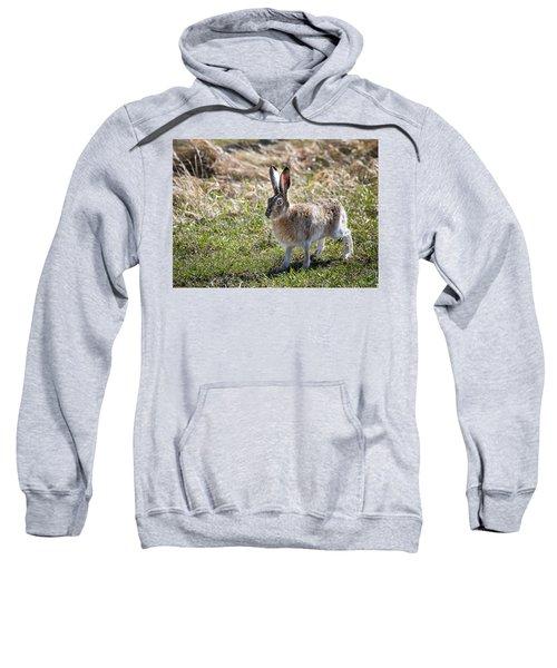 Jackrabbit Sweatshirt