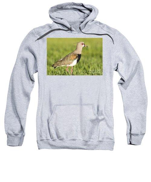 Southern Lapwing Sweatshirt