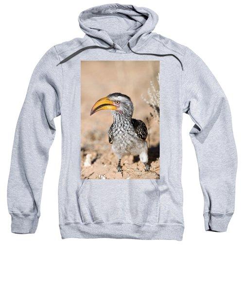Southern Yellow-billed Hornbill Sweatshirt
