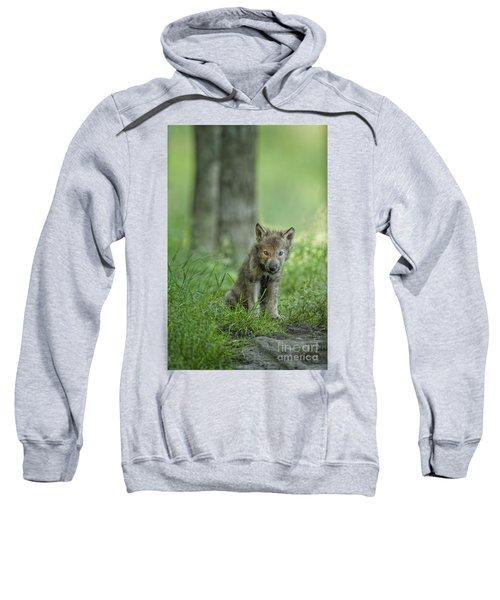 Timber Wolf Pup Sweatshirt